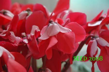 DSC_0002-450.jpg