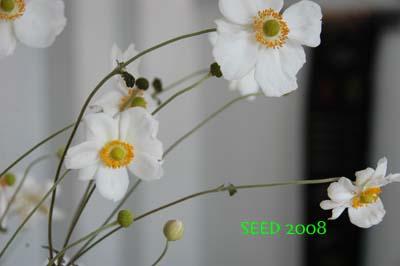 DSC_0014-400.jpg