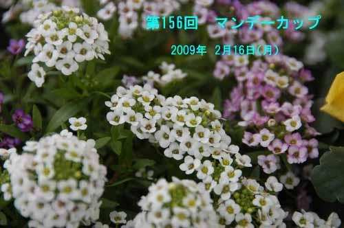 DSC_0003-500.jpg