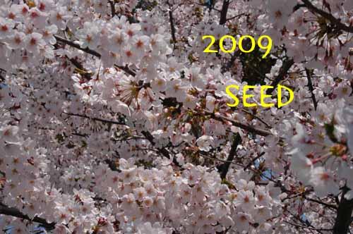 DSC_0004-500.jpg