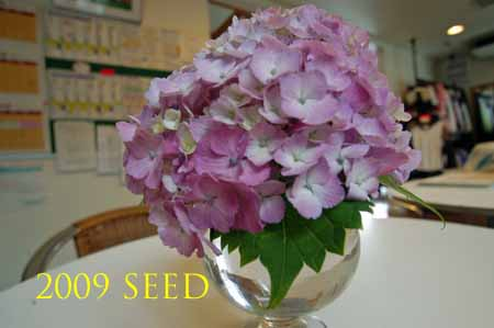 DSC_0029-450.jpg