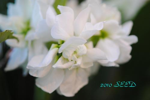DSC_0051-500.jpg